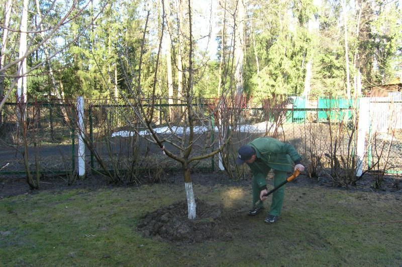 Борьба с вредителями сада