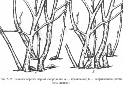 Виноград осенью  обрезка посадка и уход