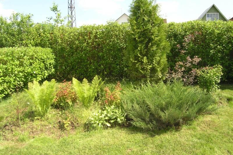 Садовые цветы посадка и уход